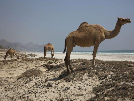 636658002672881710-AP-Oman